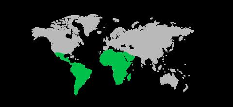 どんなときもWiFiの海外利用料