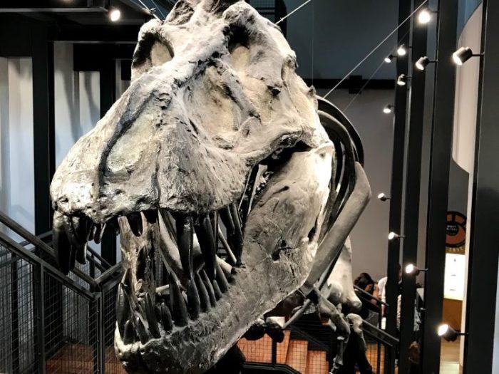 福井恐竜博物館2F