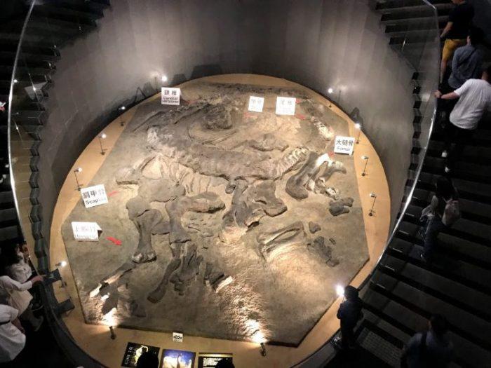 福井恐竜博物館B1F